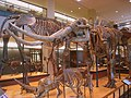 Amherst College Museum of Natural History - IMG 6447.JPG