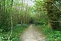 An unofficial path through High Wood - geograph.org.uk - 1300789.jpg