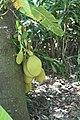 Andromeda Botanical Gardens 18.jpg