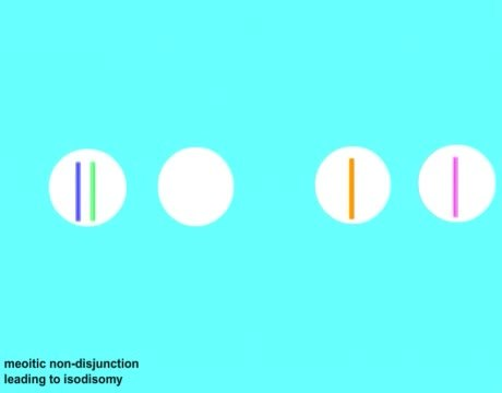 genomic imprinting animation - photo #26