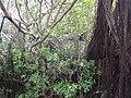 Anping Tree House 安平樹屋 - panoramio (1).jpg