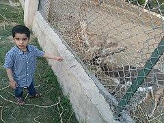 Antelope enclosure at Mini zoo in Tilyar lake complex.jpg