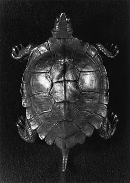 Antoine-Louis Barye - Turtle - Walters 2756 - Top