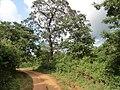 Anuradhapura, Sri Lanka - panoramio.jpg