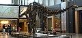 Apatosaurus at Tellus.JPG