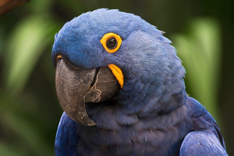 Como é o Pantanal?