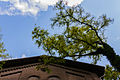 Arbeitserziehungslager Ohrbeck Giebel Pumphaus mit Baum.jpg