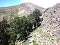 Arbolitos2007 097.jpg