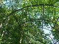 Arboretum Gaston Allard - Juin 2014.JPG
