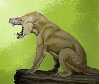 Arctocyonidae - Arctocyon