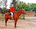Argentina-Dennis - Horse Ride (49700152981).jpg