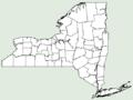 Arthraxon hispidus NY-dist-map.png