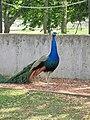 Assiniboine Park Zoo, Winnipeg (480470) (24455950694).jpg