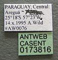 Atta sexdens casent0173816 label 1.jpg