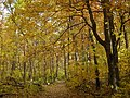 Autumn - panoramio (65).jpg