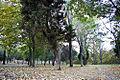 Autumn Leaves (1864304172).jpg