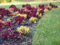 Autumn flower bed (8117522265).jpg