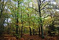 Autumn in Fore Wood - geograph.org.uk - 1577185.jpg