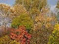 Autumn in Hoofddorp pic1.JPG
