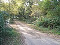 Autumn on the footpath from King Edward's School to Culmer - geograph.org.uk - 1545830.jpg