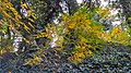 Autumn season in Butanic Garden فصل پاییز در باغ بوتانیکال تفلیس 26.jpg