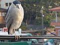 Aves na Barra da Lagoa.jpg