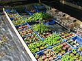 Baby plants - Flickr - peganum.jpg