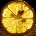 Backlit lemon slice with seeds.jpg