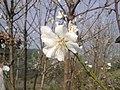 Baharın başlangıcı ( r. nazilli ) - panoramio.jpg