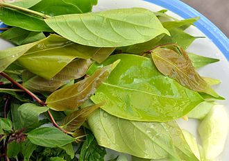 Spondias mombin - Bai makok, the name for the leaves of the Spondias mombin in Thai