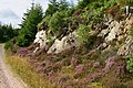 Balblair Wood Scene - geograph.org.uk - 551606.jpg