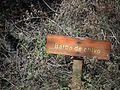 Barba de chivo en Parque Nacional Lihué Calel.jpg