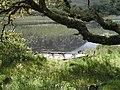 Barque dans le parc de l'abbaye de Kylemore.jpg