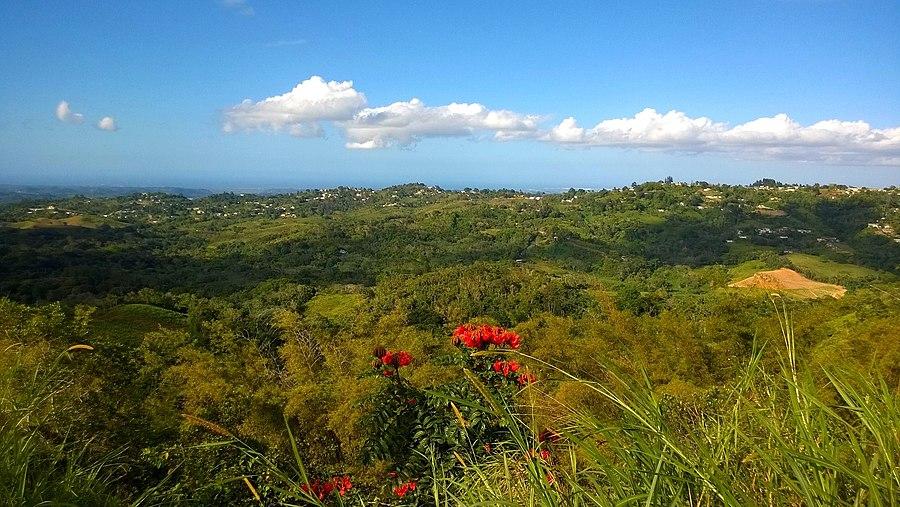 Palos Blancos, Corozal, Puerto Rico
