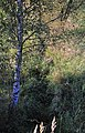 Batelov, Hraniční creek 2.jpg