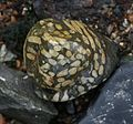 Beach pebble containing fossils - Flickr - S. Rae (1).jpg