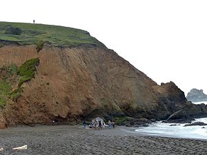 Mori Point - Dead sperm whale on beach below Mori Point (April 2015).