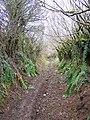 Beaconpark Lane - geograph.org.uk - 1772672.jpg