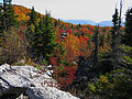 Bear-rock-trees-mountains-fall - West Virginia - ForestWander.jpg