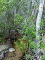 Bear Creek Cañon Park - Bear Creek.jpg