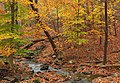 Beartown Woods Natural Area (8) (8132815899).jpg