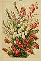 Beautiful flowering trees and shrubs for British and Irish gardens (1903) (20364854121).jpg