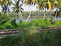 Beautiful kollam backwaters.JPG