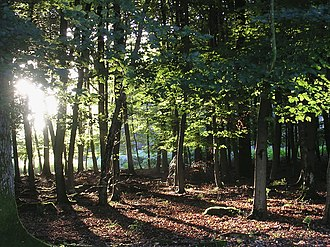 Doriath - Beech woodland in the New Forest, England. The English countryside provided inspiration for much of Tolkien's works