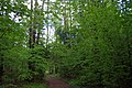 Belarus, Naroch - panoramio (98).jpg