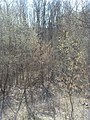 Bezhitskiy rayon, Bryansk, Bryanskaya oblast', Russia - panoramio (235).jpg