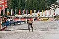 Biathlon WC Antholz 2006 01 Film2 PursuitWomen 19 (412749639).jpg