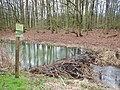 Biberdamm beim Landeskulturgraben - panoramio.jpg