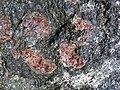 Big garnet amphibolite (Precambrian; Warrensburg, Adirondack Mountains, New York State, USA) 50.jpg