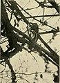 Bird lore (1919) (14770134313).jpg